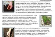 Агротехника гладиолусов