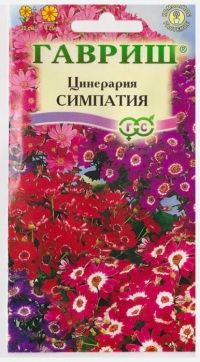 Цинерария Симпатия цветущая гибридная
